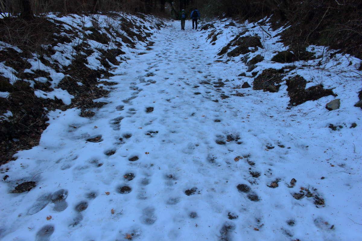 登山道までの林道には凍った残雪がありました