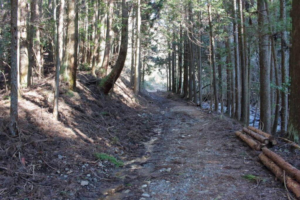 足柄駅近くまで沢沿いの歩きやすい林道が続きます