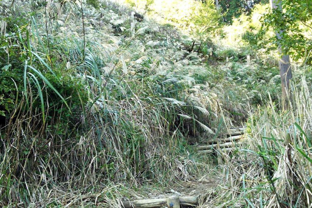 沢沿いの道が終わるとススキに囲まれた登山道へ