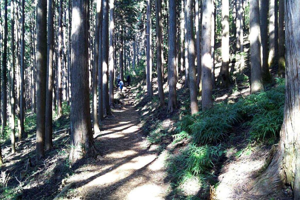 木漏れ日が差す気持ちの良い登山道