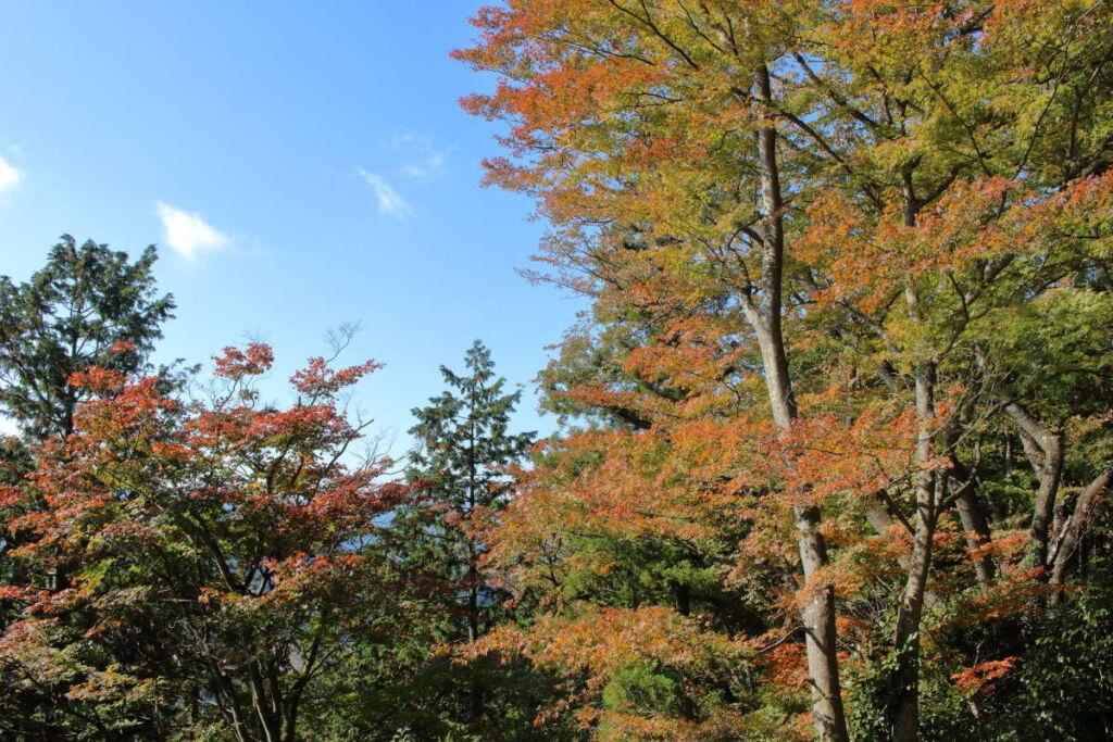 高水山常福院から山頂までの間には色づいた木々も!