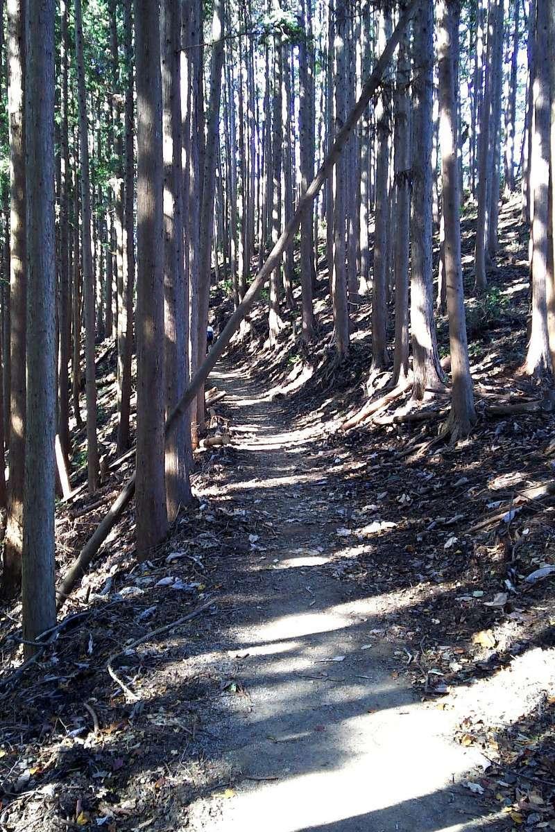 岩茸石山へは尾根伝いの快適な登山道を進みます