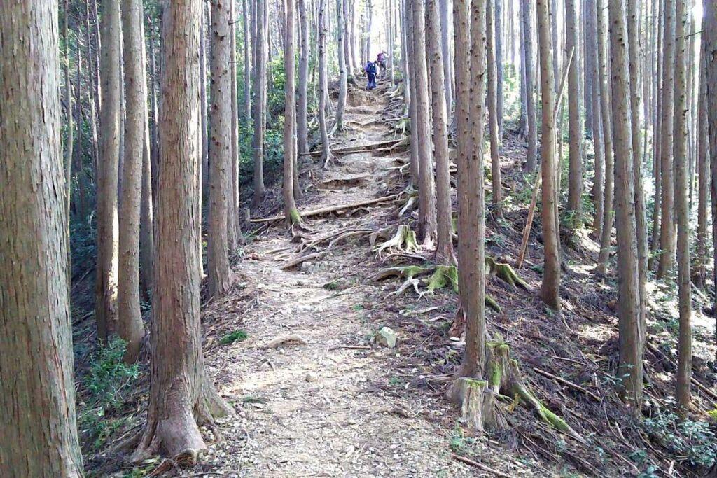 下山コースですがたまにこんな登りも!