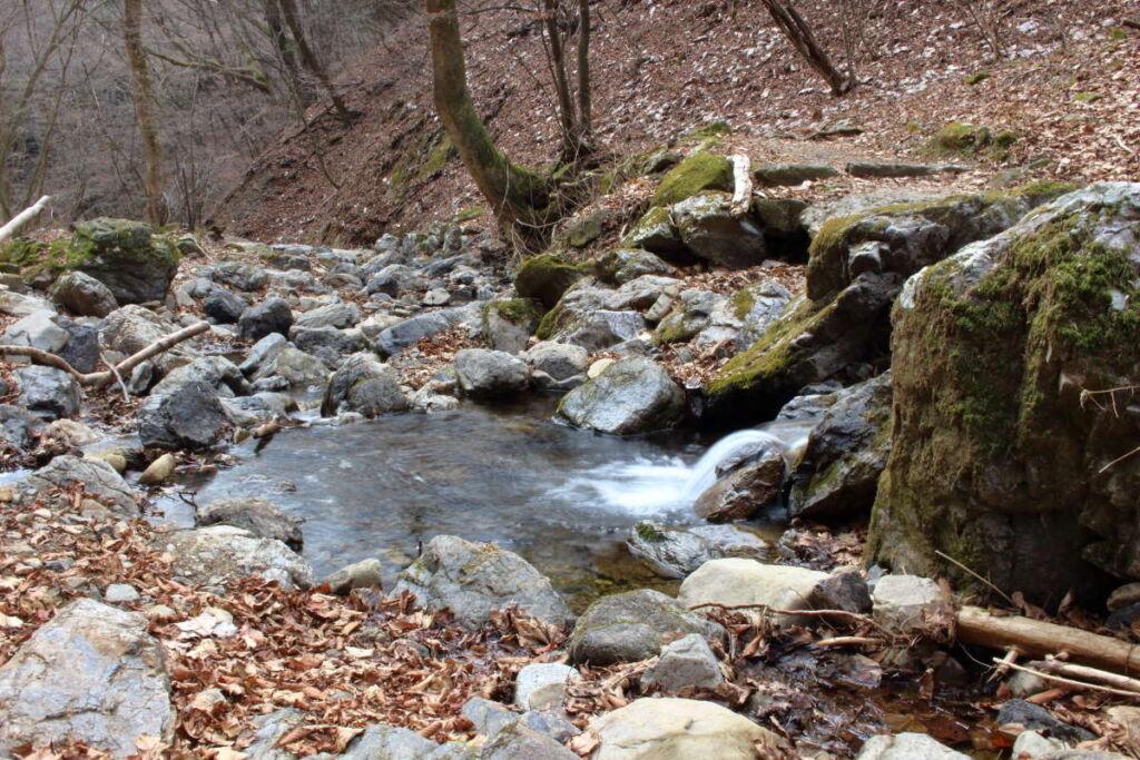 苔むした岩々が特徴的なロックガーデン