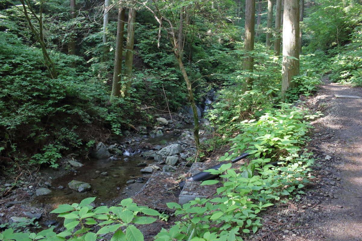 陣馬山への登山口に入ると沢沿いの緩やかな登りへ