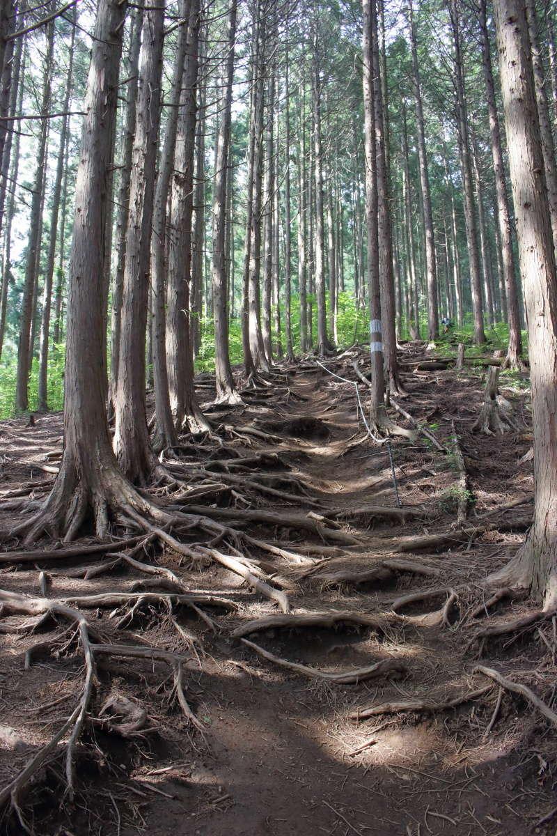 木の根っこの中を登っていきます
