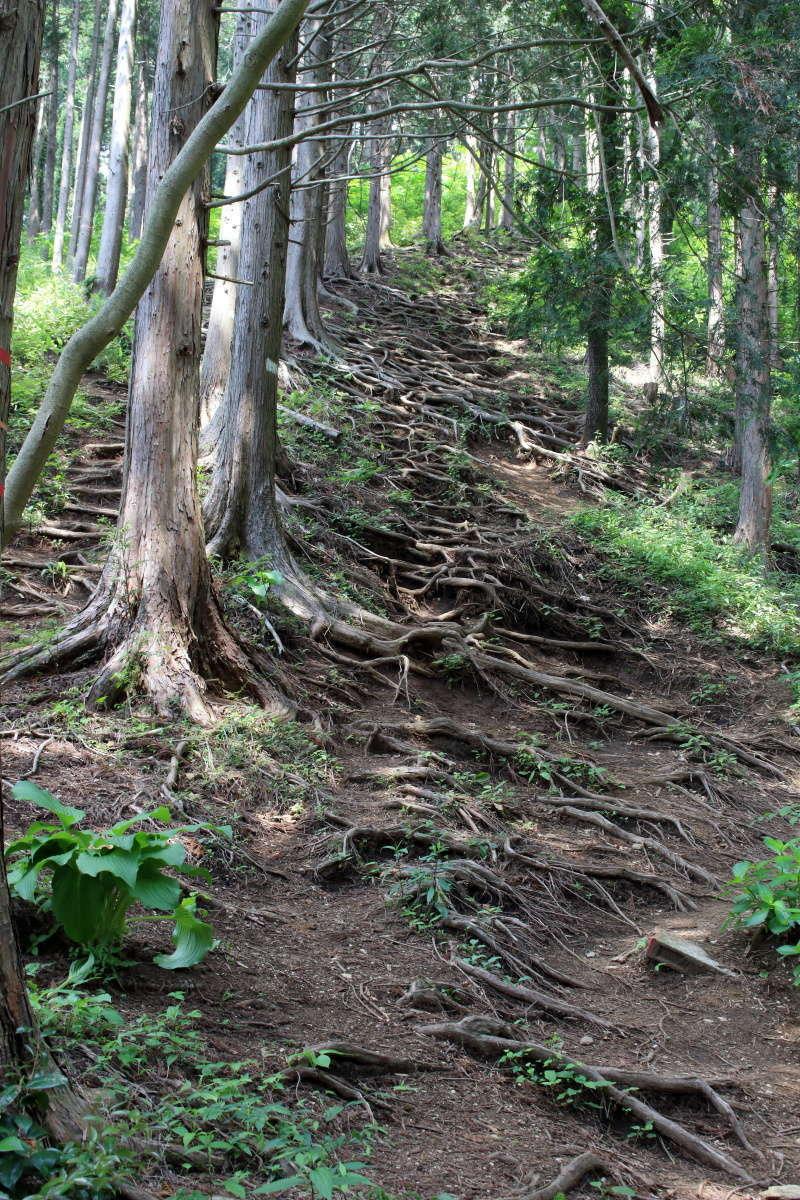 堂所山への道は厳しい上り坂です