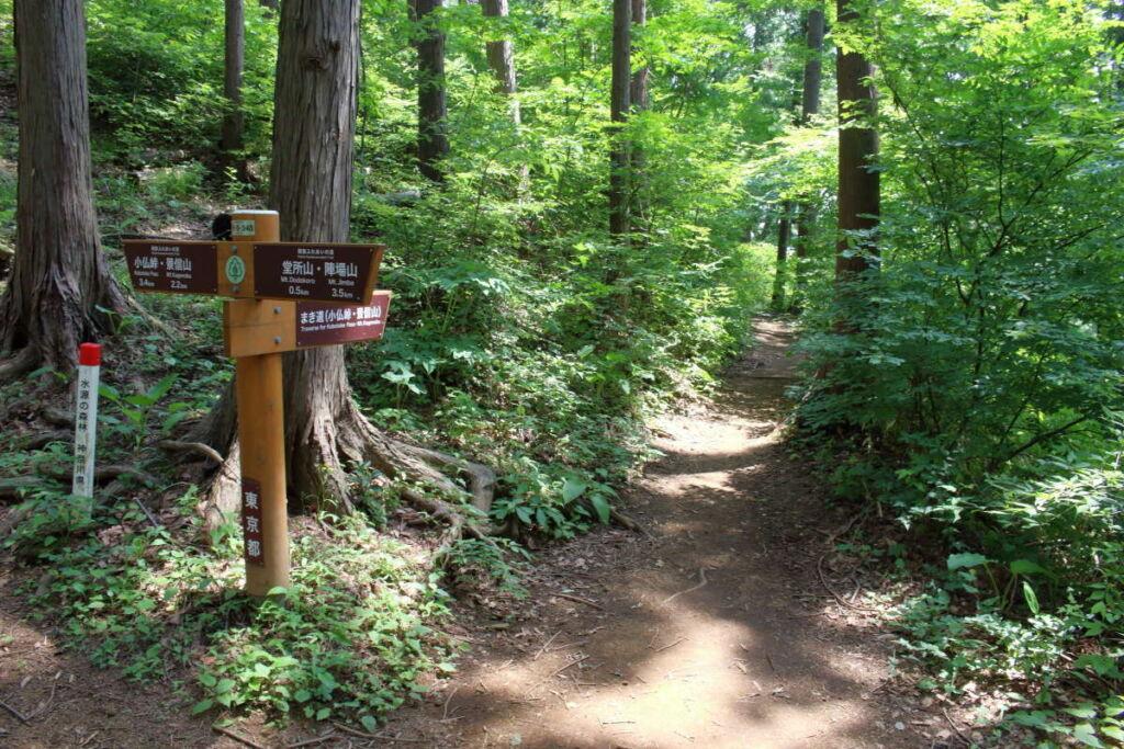 陣馬山~景信山の縦走路は巻き道が多くあります