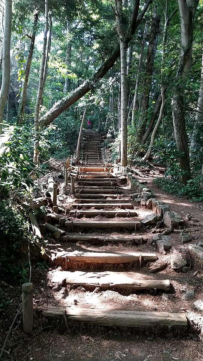 高尾山からの下山は6号路へ、最初は木の階段が続きます