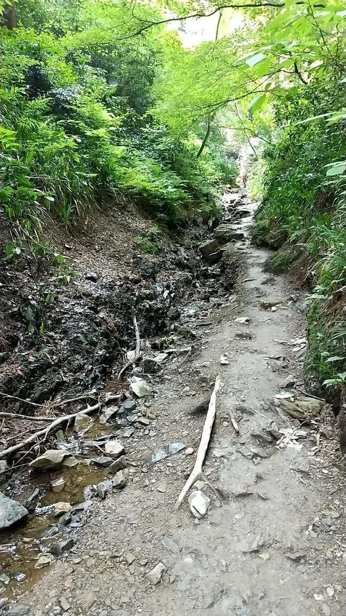 高尾山6号路は沢沿いの登山道が続きます