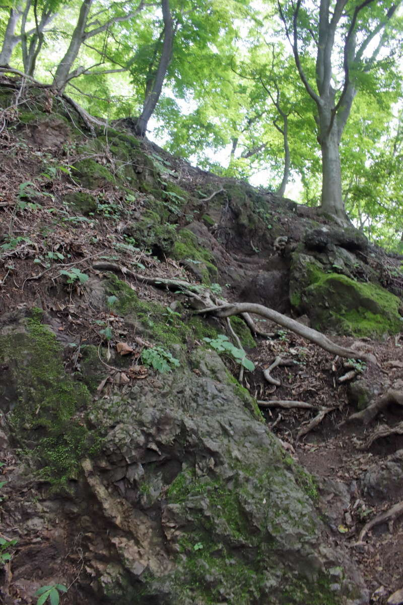 伊豆ヶ岳山頂直下は急な下り坂が続きます、滑りやすいので注意!