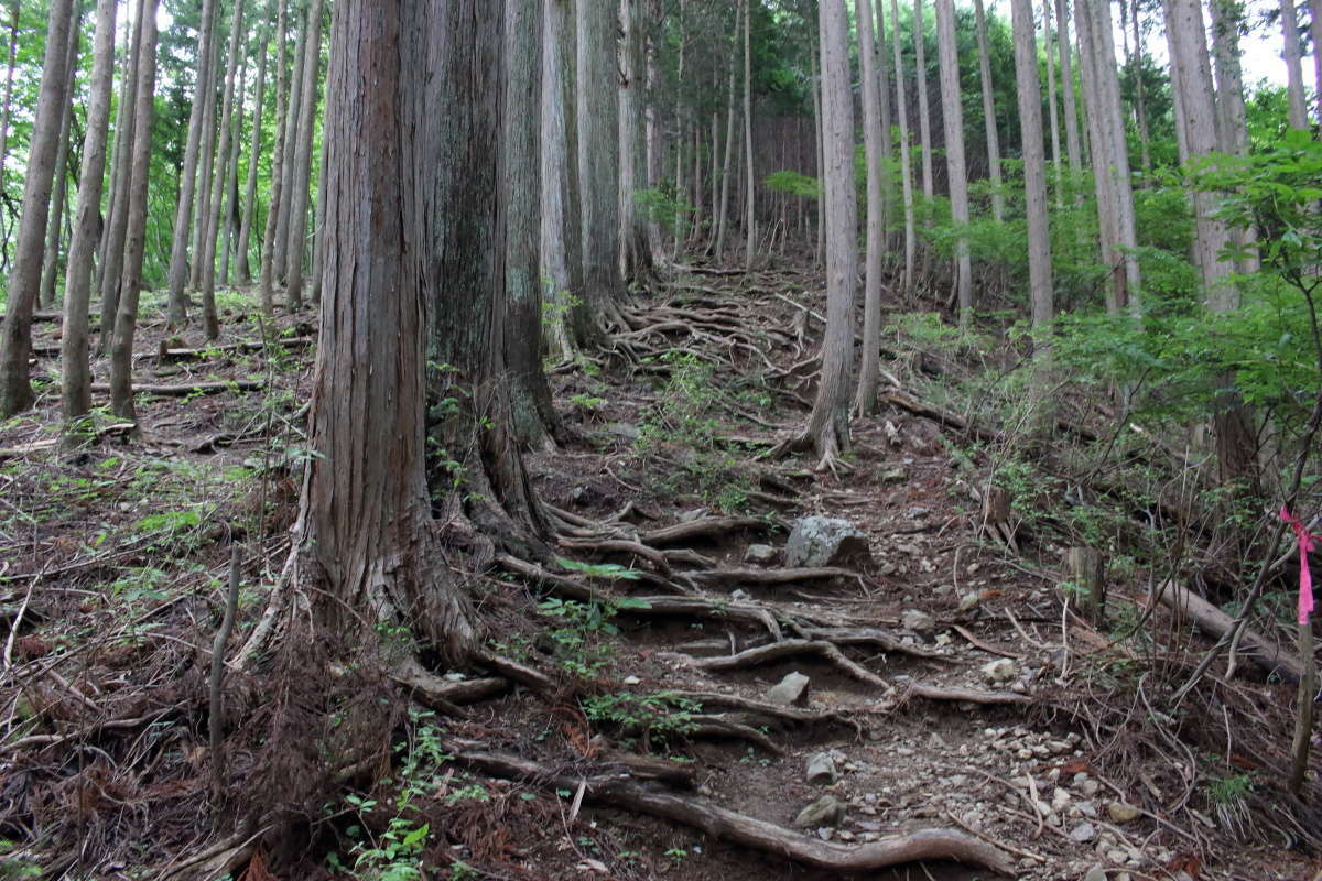天目指峠からはいきなり木の根っこを歩く急登