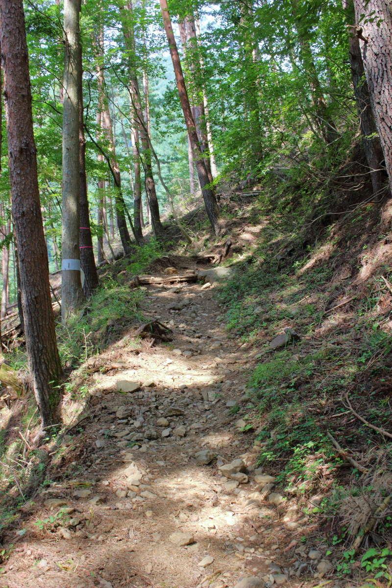 三ツ峠山の登山道、序盤は歩きやすい樹林帯の道です