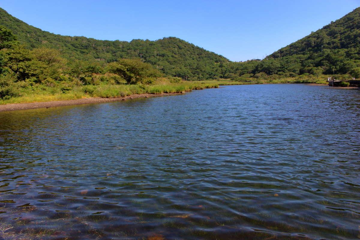小さな湿原「覚満淵」は高山植物・湿生植物の宝庫!