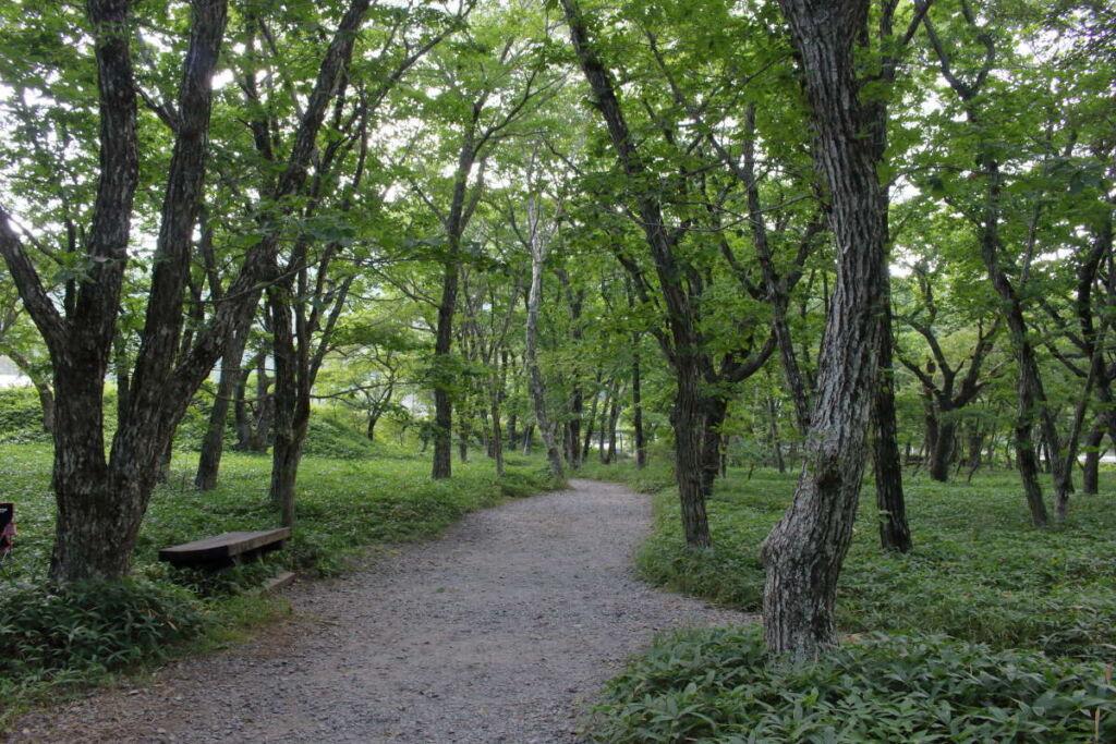 覚満淵の周囲の林は避暑に最適!