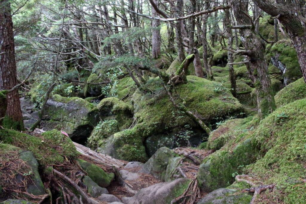 青年小屋から押手川への登山道は岩が多め