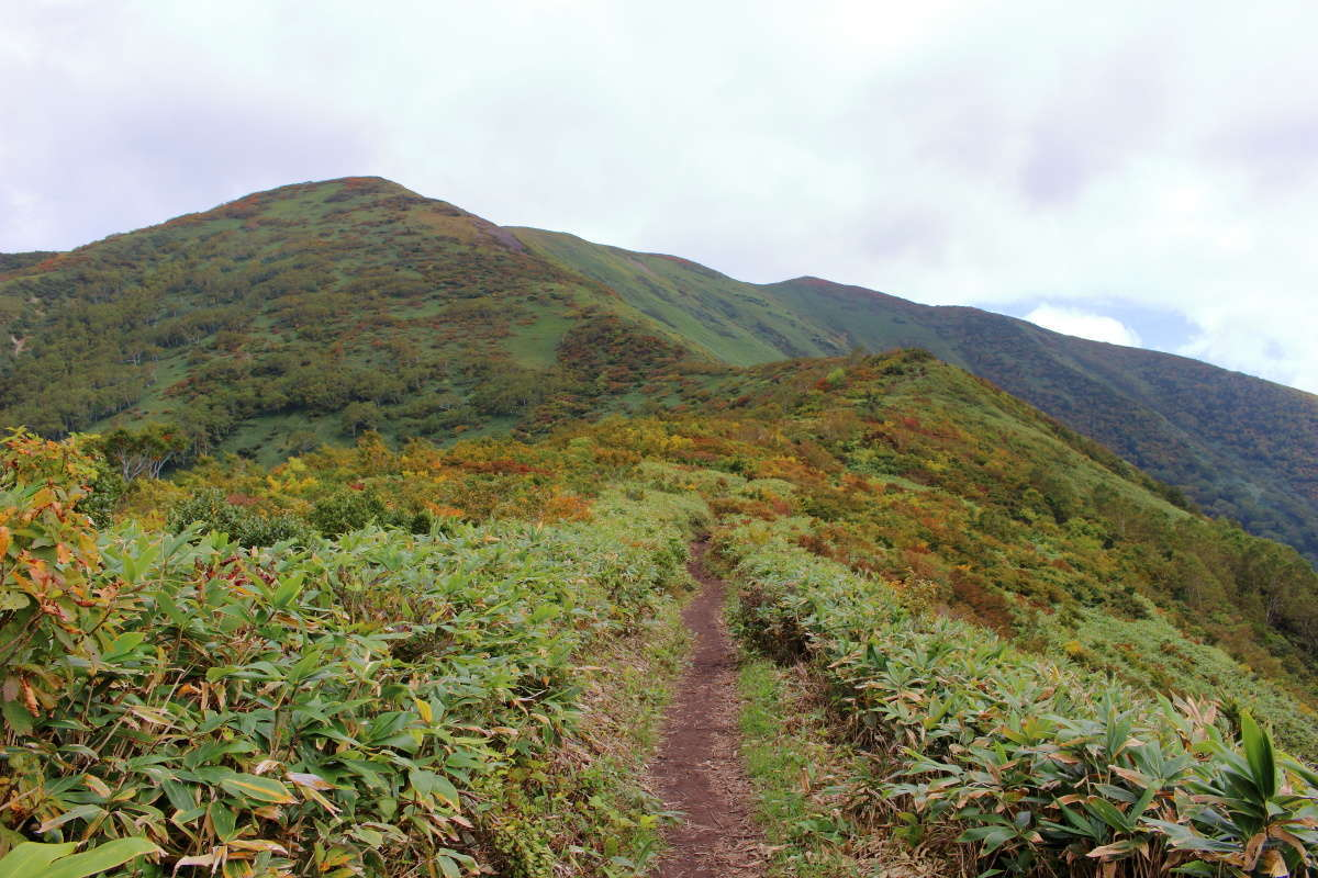 色づき始めた低木を眺めながらの快適な稜線歩き