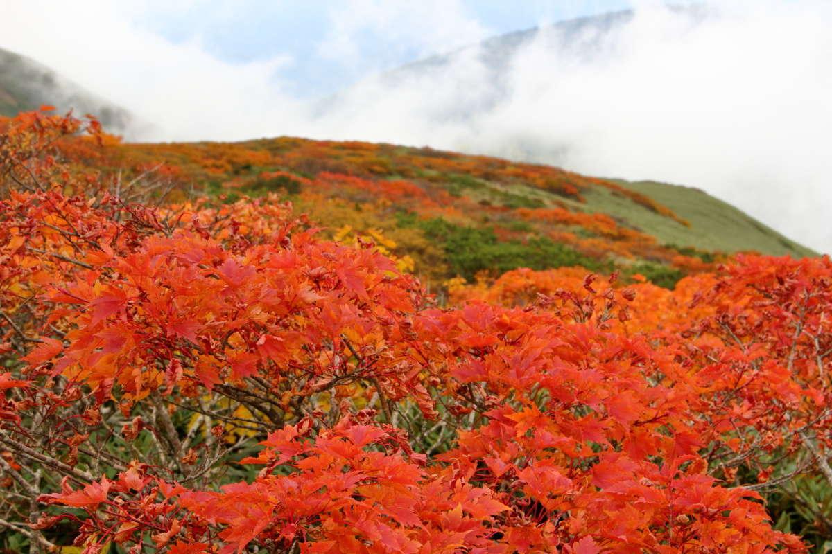 平標山へ戻る途中でも鮮やかな紅葉の風景を見られました